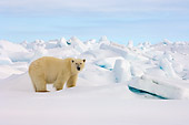 BEA 06 SK0133 01