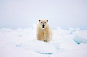 BEA 06 SK0138 01