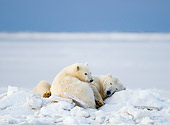BEA 06 SK0229 01