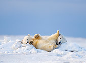 BEA 06 SK0230 01