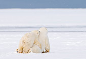 BEA 06 SK0235 01