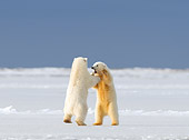 BEA 06 SK0238 01
