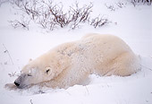 BEA 06 TL0005 01