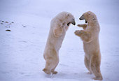 BEA 06 TL0010 01