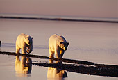 BEA 06 TL0016 01