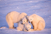BEA 06 TL0021 01
