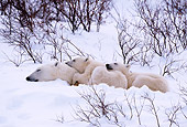 BEA 06 TL0025 01