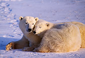 BEA 06 TL0029 01