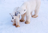 BEA 06 TL0030 01