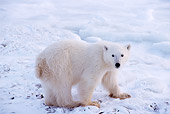 BEA 06 TL0033 01