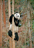 BEA 07 GL0001 01