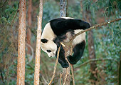 BEA 07 GL0002 01