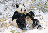 BEA 07 GL0003 01