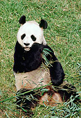 BEA 07 RK0018 04