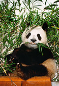BEA 07 RK0029 42