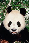 BEA 07 RK0032 15