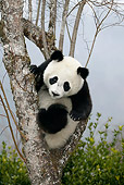 BEA 07 KH0002 01