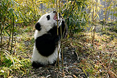 BEA 07 KH0003 01