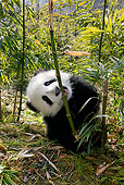BEA 07 KH0004 01