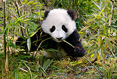 BEA 07 KH0005 01