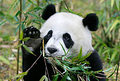 BEA 07 KH0007 01