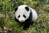 BEA 07 KH0009 01