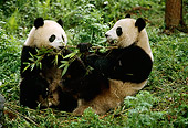 BEA 07 LS0001 01