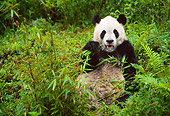 BEA 07 NE0002 01