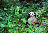 BEA 07 NE0003 01