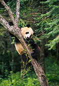 BEA 07 NE0007 01