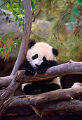 BEA 07 NE0009 01