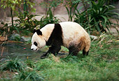 BEA 07 RK0003 54