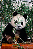 BEA 07 RK0029 44