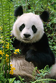 BEA 07 TL0005 01