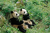 BEA 07 TL0007 01