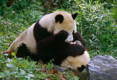 BEA 07 TL0009 01
