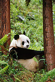 BEA 07 TL0011 01