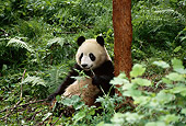 BEA 07 TL0012 01