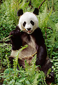 BEA 07 TL0013 01