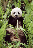 BEA 07 TL0014 01