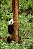 BEA 07 TL0015 01