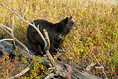 BEA 08 MC0001 01