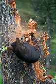 BEA 08 KH0002 01