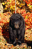 BEA 08 SM0026 01