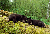 BEA 08 TK0001 01