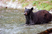 BEA 08 TK0003 01