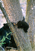 BEA 08 TL0002 01