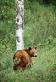 BEA 08 TL0004 01