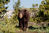 BEA 08 TL0005 01