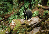 BEA 08 TL0016 01